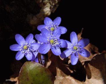 flores-blasiddor-lisabar.jpg