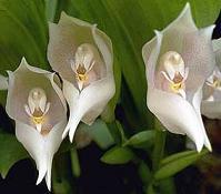 orquideas-blancas2.jpg