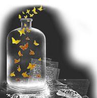 20090113214622-mariposas