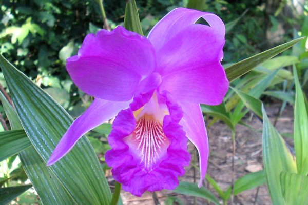 orquideas04