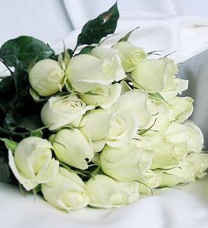 rosasblancas