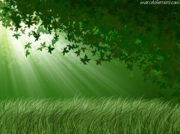 bosque_800x600