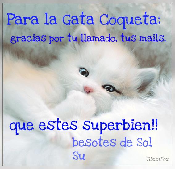 gatacoqueta